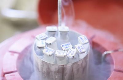 semen-freezing