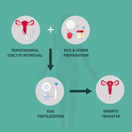 Embryo Donor Treatment